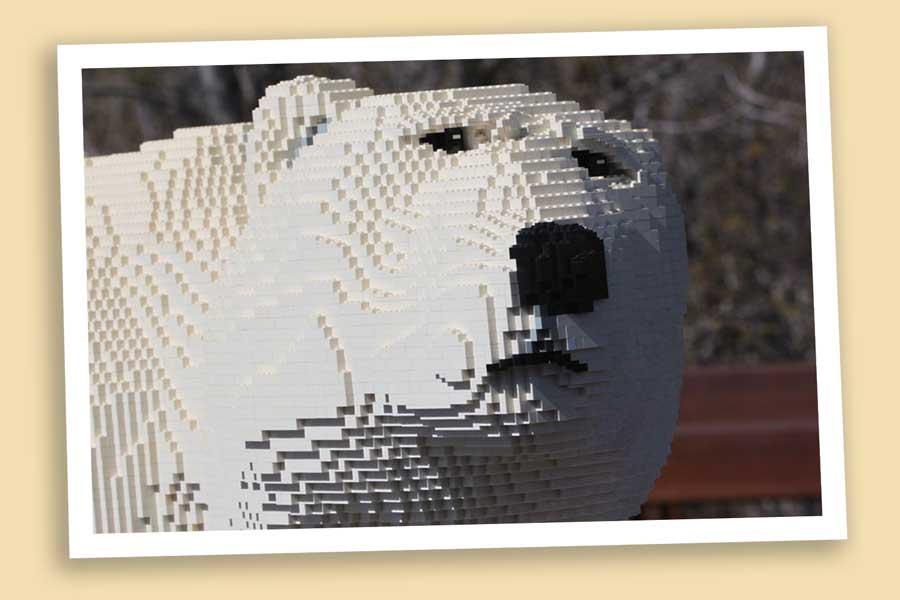 coh_polar_bear