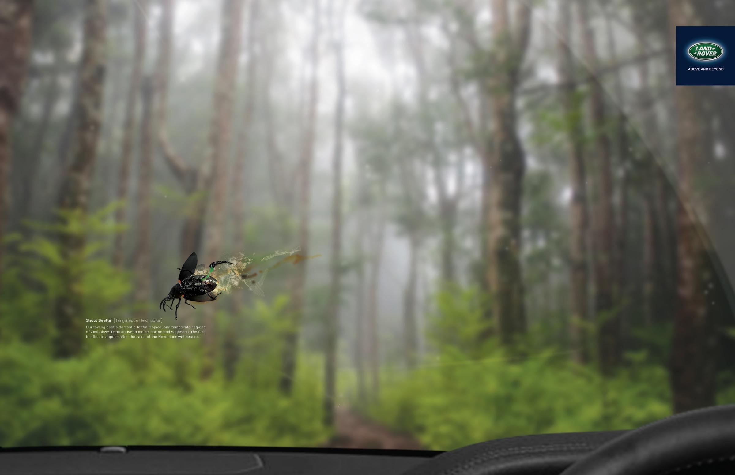 land_rover-snout_beetle_aotw